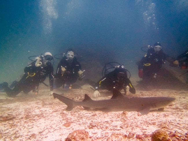 Swen diving with sharks